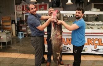 Menzelet'te yakalanan balığın ağırlığı 100 kilo, boyu 2 metre