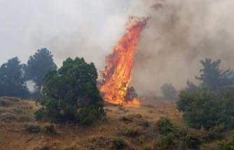 Afşin'de 5 hektar orman yandı