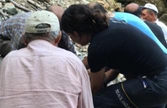 Ceviz ağacından düşen yaşlı adam yaralandı