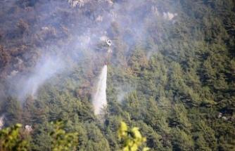 Tarım ve Orman Bakanlığı yangınlarla ilgili açıklama yaptı