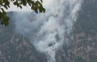 Andırın ve Göksun'da orman yangınından 12 hektar zarar gördü