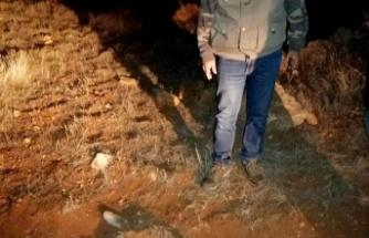 Av tüfeğiyle öldürülmüş vaşak bulundu