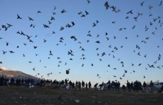 """Posta güvercinleri """"eve dönüş"""" antrenmanıyla yarışlara hazırlanıyor"""