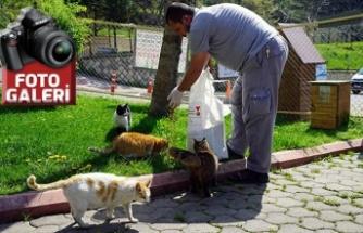 Büyükşehir sokak hayvanlarını besliyor!