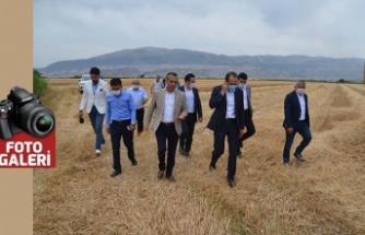 AK Partili Özdemir, biçerdöverlerle hasat yaptı!