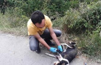 Tüfekle ateş edilen köpek yaralandı