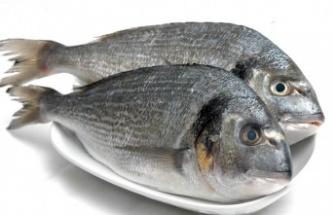 Çipura balığı faydaları nelerdir?