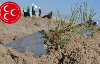 MHP'den Hatay'daki yangın sonrası fidan kampanyası