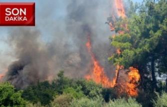 Orman yangınında bir hektarlık alan zarar gördü