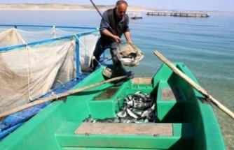 Şanlıurfa'dan yıllık 20 bin ton alabalık