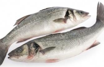 Levrek balığı: Faydaları... Özellikleri…
