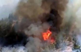 Bulutoğlu'nda orman yangını söndürülemedi