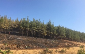 Türkoğlu'nda ormanlık alanda çıkan örtü yangını söndürüldü