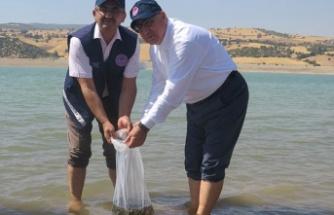 Kartalkaya Baraj Gölüne yavru sazan balığı bırakıldı