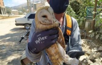 Peçeli Baykuş'u AKEDAŞ ekipleri kurtardı