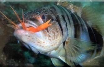 Balıklar beslenme yanında sayısız hastalığa da şifa oluyor
