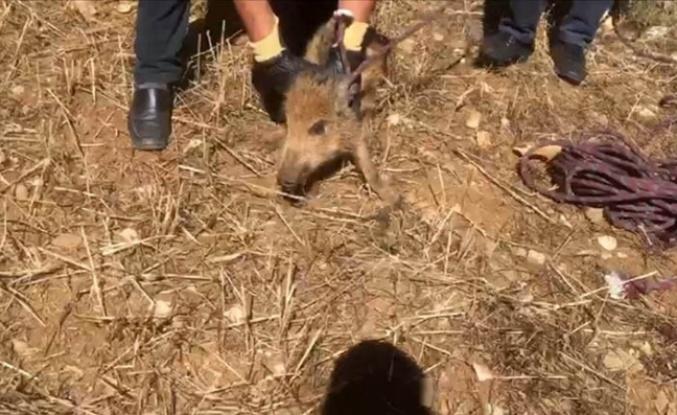 Yavru yaban domuzunu düştüğü kuyudan itfaiye kurtardı
