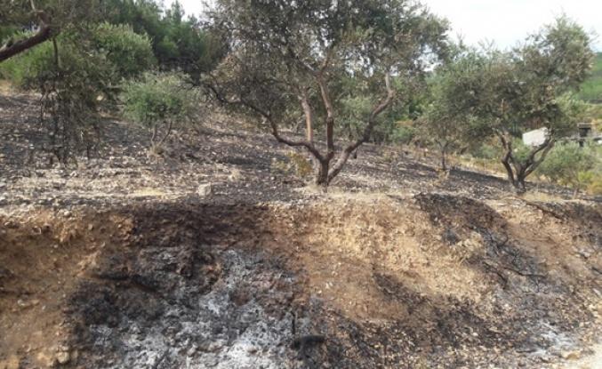 Kahramanmaraş'ta zeytinlik alanda yangın